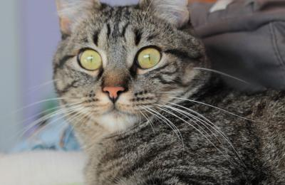 Leo, un gato en San Valentín. Fotografía: Maite Martinez